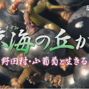 あす放送「涼海の丘から~野田村・山葡萄と生きる~」