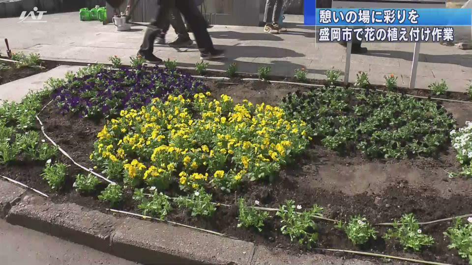 憩いの場に彩りを…市民が花の苗植え付け