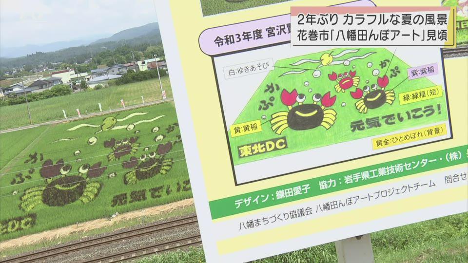 花巻市・八幡の田んぼアート2年ぶりに