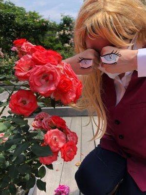 見頃のバラ