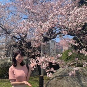 石割桜の夜の姿をたっぷりと!きょう夕方