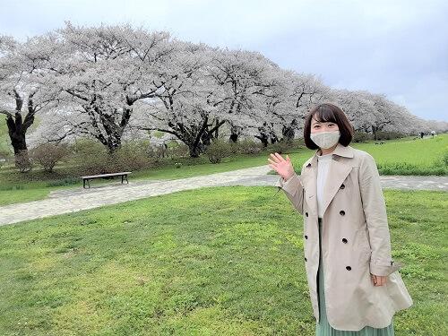 開園100周年!北上展勝地の桜🌸